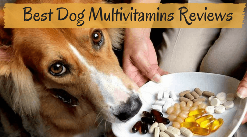 Best Dog Multivitamins Reviews