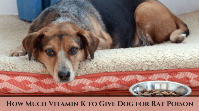 How Much Vitamin K to Give Dog for Rat Poison? – Treat Your Dog!