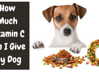 How Much Vitamin C can I Give My Dog