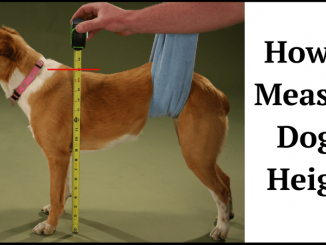 How to Measure a Dogs Height
