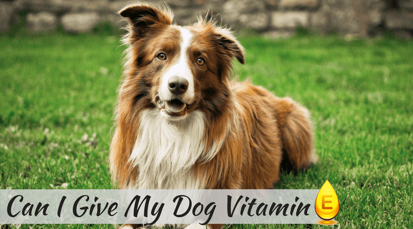 Can I Give My Dog Vitamin E