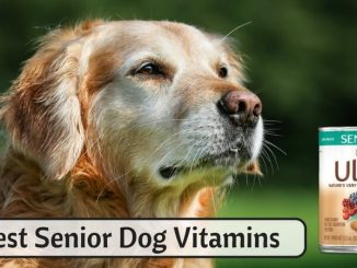 Best Senior Dog Vitamins