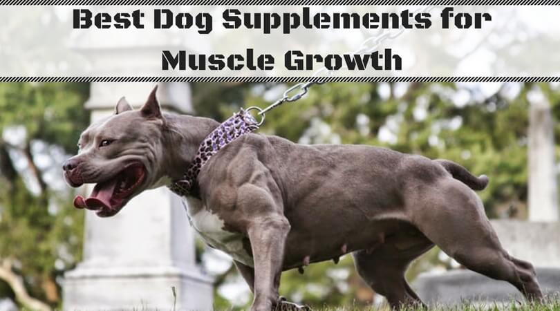 Best Dog Supplements for Muscle Growth