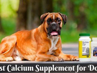 Best Calcium Supplement for Dog