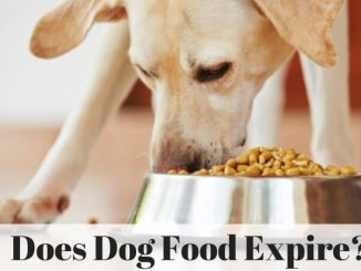 Does Dog Food Expire_