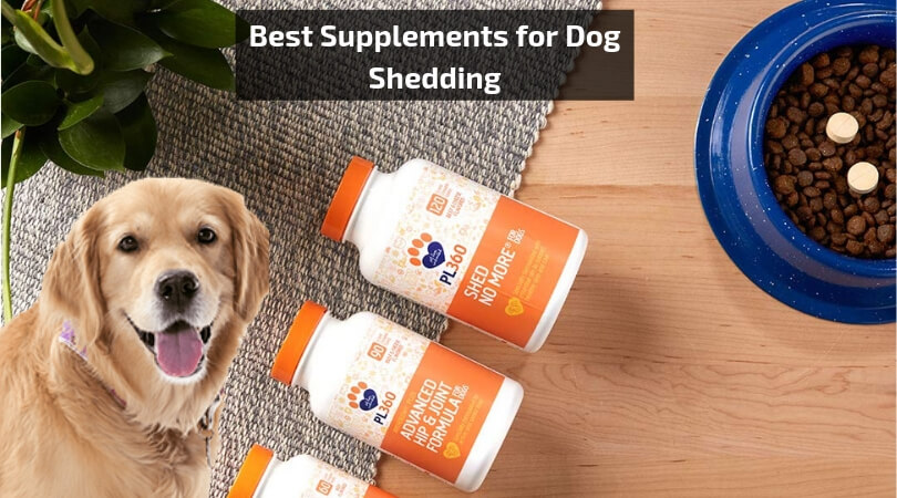 Supplements for Dog Shedding