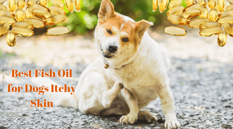 Best Fish Oil for Dogs Itchy Skin