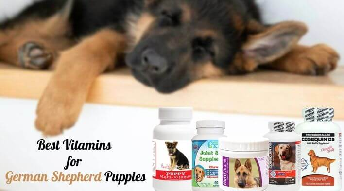 Best Vitamins for German Shepherd Puppies