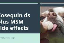 Cosequin ds plus MSM side effects