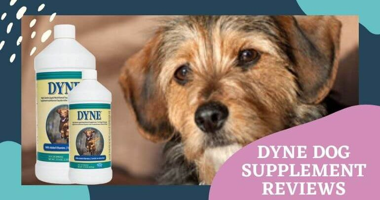 Dyne Dog Supplement Reviews
