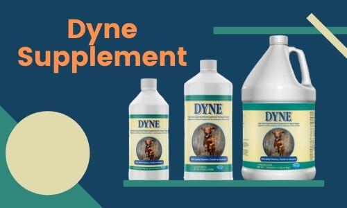 Dyne Supplement