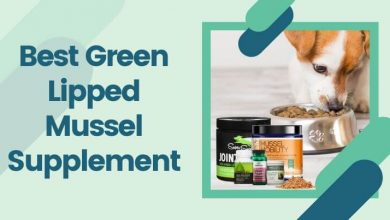 Best Green Lipped Mussel Supplement