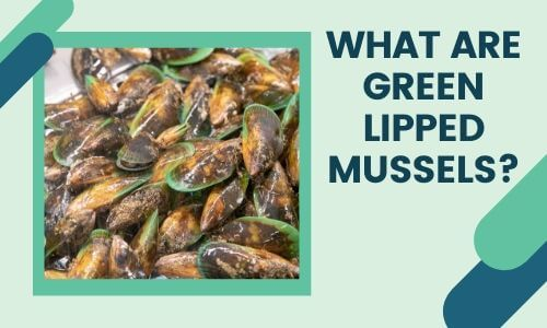 What are Green Lipped Mussels