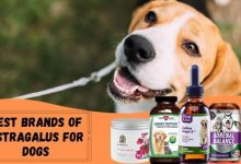 Best Brands of Astragalus for Dogs