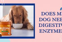 Does My Dog Need Digestive Enzymes