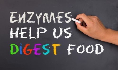 enzymes helps dog to digest food