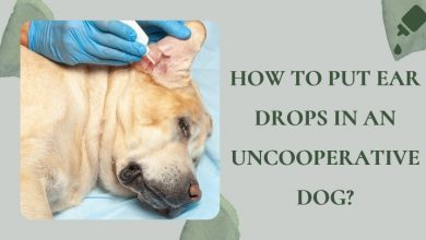 How to put ear drops in an uncooperative dog