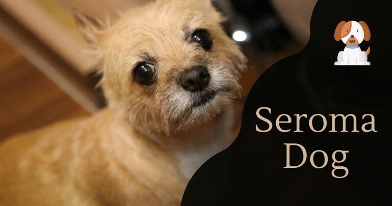Seroma Dog